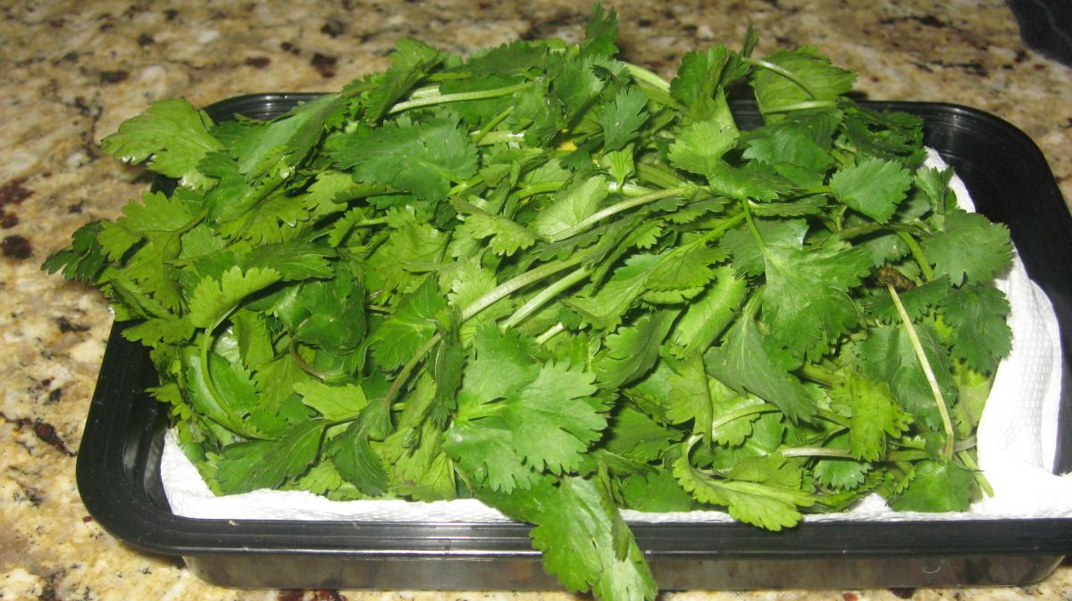 Washed Cilantro